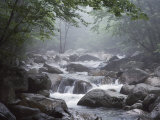 A Stream Courses Through Baxter State Park