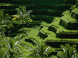 Scenic Valley with Rice Fields in Balis Central Highlands