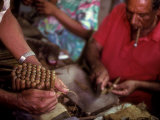 A Man Bundles up a Bunch of Finished Cigars in a Factory in Trinidad  Cuba  Trinidad  Cuba