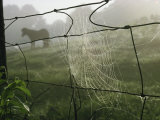 Spider Web on a Wire Fence