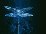 A Model of a Dragonfly in a Wind Tunnel Shows the Pattern of Air Passing over the Insect
