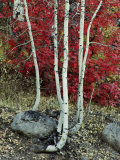 Fall Color in the Wasatch Mountains of Utah