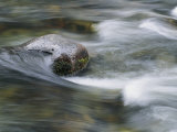 Water Swirls Around a Rock