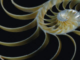 A Close-up of the Cross-Section of a Chambered Nautilus Shell