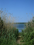 View of a Marsh Framed by Tall Grasses