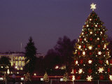 Night View of the Lighted Tree in Front of the White House