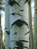 Detail of a Tree Trunk with Face-Like Features