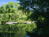 Hardwood Forest on the Eno River in Spring