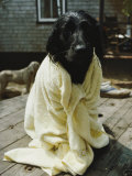 A Dog That Has Just Had a Bath