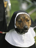 Pet Dog Dressed as a Nun during a Halloween Celebration