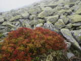 Granite Rock and Heather  Bayerischer Wald National Park  Germany