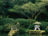 A Japanese Garden with Japanese Maple Trees