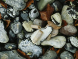 Stones and Shells at Beach  Close View  Jasmund National Park