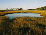 Salt Marsh  Assateague Island  Virginia