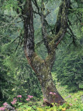 Fir Tree Forest with Wildflowers  Berchtesgaden National Park