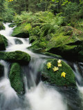 Mountain Stream Cascading Around Moss-Covered Rocks