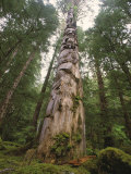 A Large Totem Pole Stands Amid Tall Trees in a Mossy Forest