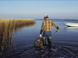 A Clam Digger Carries His Haul Through Chincoteague Island Marshes