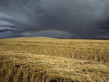 Storm Clouds and a Rainbow over a Manitoba Wheat Field