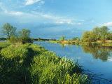 Marshlands in Spring  Unteres Odertal National Park  Germany