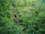 Mountain Biker on Single Track Trail Through Rhododendron