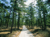 Sand Road Through the Pine Barrens  New Jersey