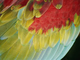 A Close View of the Wing of a Macaw