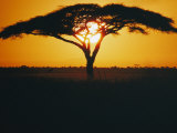 Sunset and Trees  Serengeti Plains  Tanzania