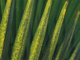 A Close View of Palm Fronds