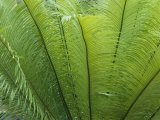 A Close View of the Leaves of a Palm Tree