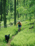 Mountain Biker and Dog on Single Track Trail Through Ferns