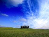 Poppies in a Wheatfield and Cypress Trees against a Huge Sky