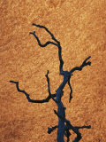 Tree Branch Silhouetted against Rock in Uluru National Park