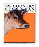 Red Cow  c1923