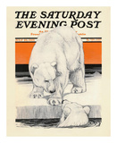 Polar Bears  c1919