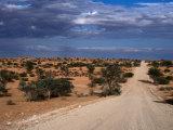Un-Made Road Cutting Across Scrubby Plains  Kgalagadi Transfrontier Park  South Africa