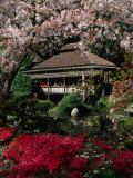 Japanese Tea Garden  San Francisco  California  USA