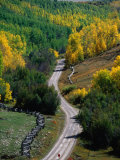 Road Leading Through Autumn Foliage in San Juan Mountains Near Telluride  Telluride  USA
