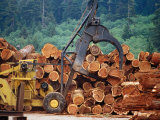 Logged Trees Being Moved at Wood Mill on Border of Redwood National Park  USA