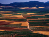 Plains of La Mancha  Spain