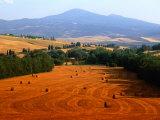 Hay Field with Monte Amiata Behind  Near Pienza  Tuscany  Italy