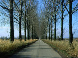 Tree-Lined Country Road in the South-East Region  Poland