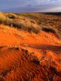 Spinifex and Saltbush Across the Dry Simpson Desert Sand Dunes  Simpson Desert  Australia
