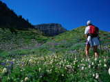 Hiking Mt Timpanogos in the Wasatch National Forest  Utah  USA