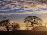Trees and House Silhouetted in Winter Morning Light  Tyrone  Northern Ireland