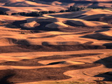 Aerial View of Wheat Field in Palouse Region  Palouse  USA