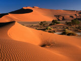 Namib Sand Dunes  Nambia Desert Park  Namib Desert Park  Erongo  Namibia