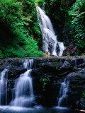 Elebana Falls and Surrounding Vegetation  Lamington National Park  Australia