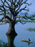 Boat Rowing Past Half-Submerged Tree in River of Amarapura  Amarapura  Mandalay  Myanmar (Burma)