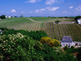 Vineyards and Farmhouses  Chinon  France